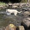 川へいってきました!