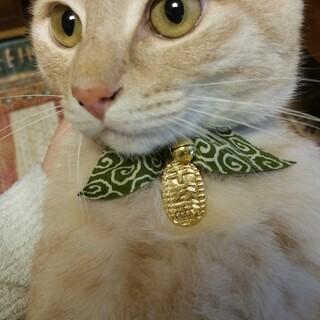 成猫 茶トラ 人間大好きゴロゴロ猫