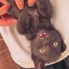 かまってアピールがすごい小柄な黒猫「雷」