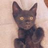 マイペースで、こっそり甘えているくる黒猫「直」