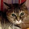 丸いパーツにハイライトの目が印象的なブレンダ