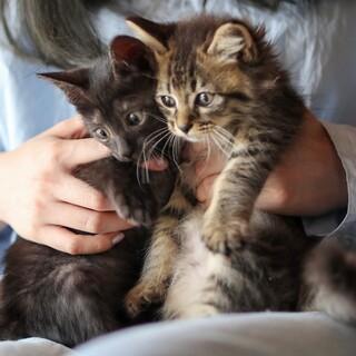 長毛のふわふわキジトラと黒猫 男の子
