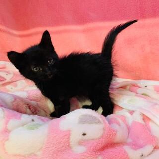 黒猫の女の子 マリー
