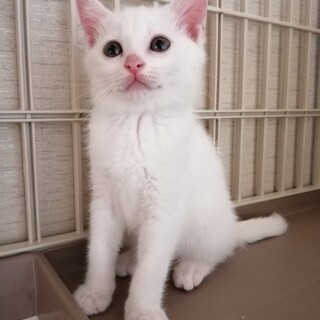 おっとりな白猫ちゃん