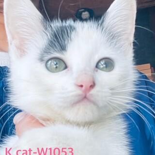 Kcat-W1053 綺麗な3兄妹♪