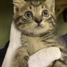 生後1ヶ月程度 子猫