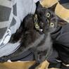 鍵しっぽの黒猫アルテ♂