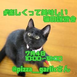 猫の譲渡会in浜松