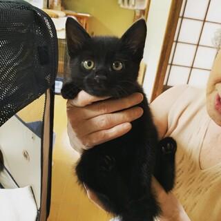 病院へ迷い込んで来た黒子猫さん