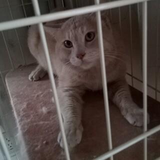 ベージュ色のアニメのトムみたいな猫