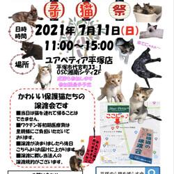 保護猫の譲渡会〜子猫祭りだ〜