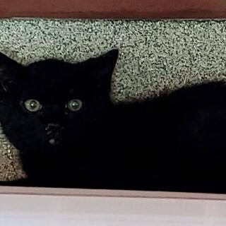 可愛い仔猫3か月です