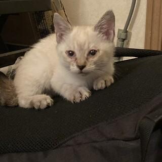 生後6週の子猫を保護! 応募感謝一旦募集終了