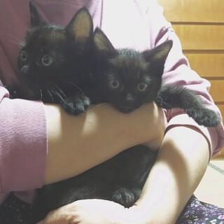 【問合殺到の為一時中止】ぴょんぴょん歩く黒猫ちゃん