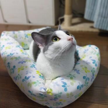 ひんやりベッドにやっと座ってくれた
