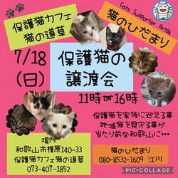 子猫だらけの保護猫の譲渡会 【猫の道草】&【猫のひだまり】合同開催