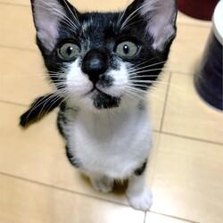 ▼猫の譲渡会▼名古屋市熱田区