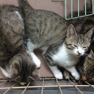 「一時中止」元気いっぱい3ヶ月の子猫ちゃん!