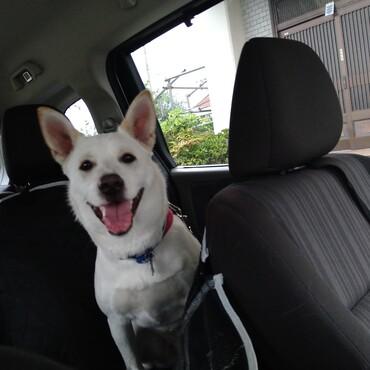 車に乗り込むととても良い表情をしてくれます♪