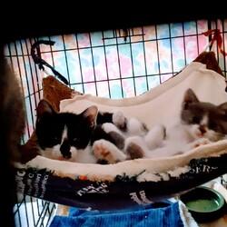 ※開催します【相模大野駅前北口デッキ】♪猫の譲渡会♪ サムネイル3