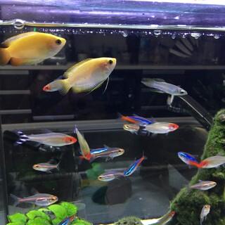急募!元気な熱帯魚の里親募集します