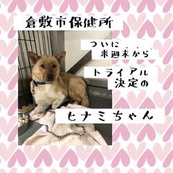 2021年7月2日の倉敷→全頭譲渡決定!