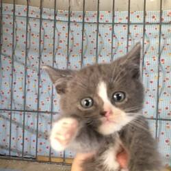 ねこの手の会【猫の譲渡会開催】6月26日(日)13時30分〜16時00分【名古屋北】参加猫
