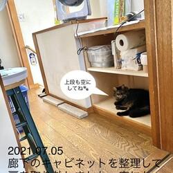 廊下にも猫スペース