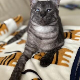 人猫大好き、穏やかなルルちゃん