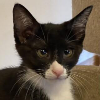 とても可愛い子猫ちゃんの里親さん募集
