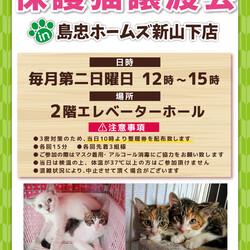 7/11(日)おーあみ避難所譲渡会in新山下