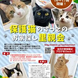 『保護猫のずっとのお家探し里親会』。 サムネイル1