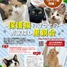 『保護猫のずっとのお家探し里親会』。