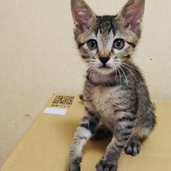 『保護猫のずっとのお家探し里親会』。 サムネイル3
