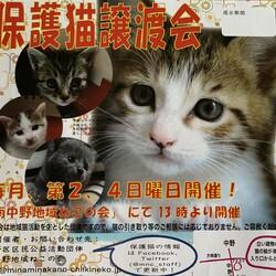 【保護猫譲渡会】南中野地域ねこの会