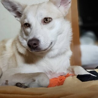 思わず見とれちゃう♡美犬な  Azuさん