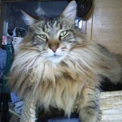 猫壁チャレンジが流行ってますが?