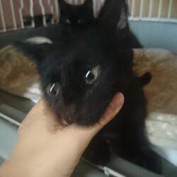 猫ちゃんの里親譲渡会IN高井戸CHICHI サムネイル1