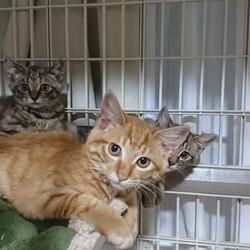 猫ちゃんの里親譲渡会IN高井戸CHICHI サムネイル3