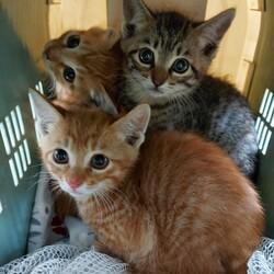 みんにゃの家 保護猫の譲渡会 サムネイル1