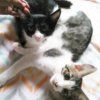 仲良し兄妹子猫