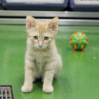 譲渡対象猫の紹介(C210517-6)