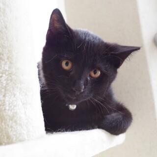 地域の餌やりさんの所で増えてしまった 黒猫