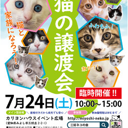 子猫26匹のオリンピック/愛知県みよし市 サムネイル1