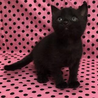 将来大物の予感がする黒猫