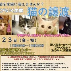 名古屋市名東区★猫の譲渡会★ サムネイル1