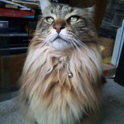 猫のヒゲ疲れで食事をやめるという話は…