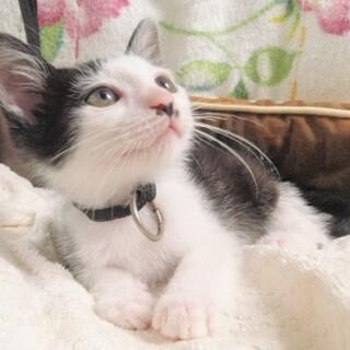 白黒子猫 ありがとうございました
