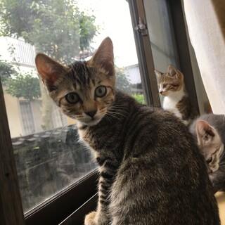 可愛い3兄妹『キィ』くん♫