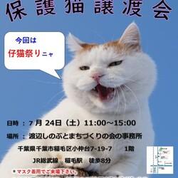 稲ねこ 保護猫譲渡会 仔猫祭りです! サムネイル1